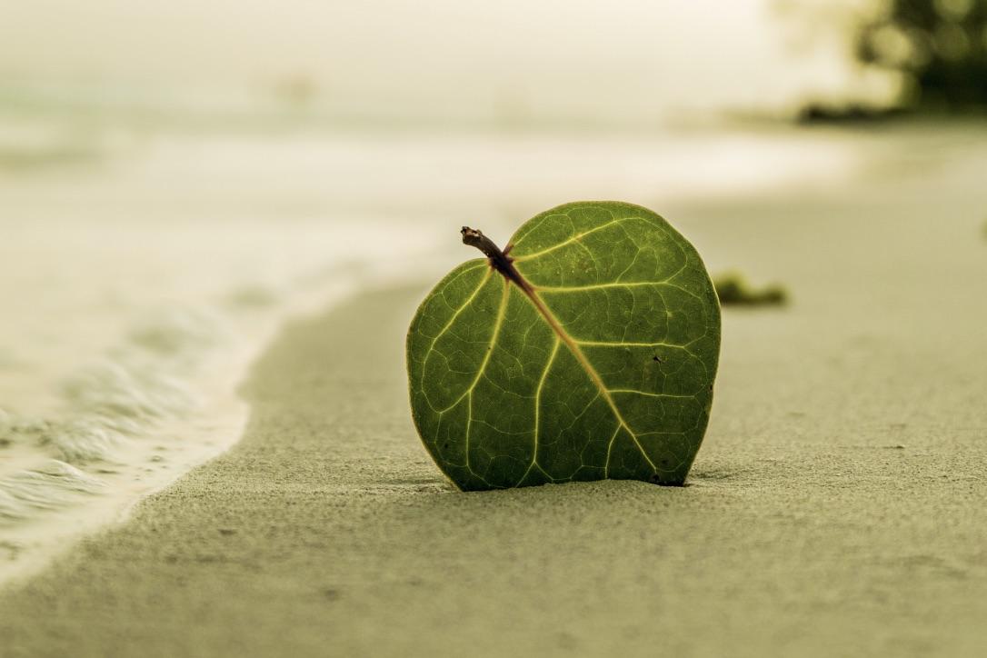 Prendre soin de soi et de la planète est source de joie